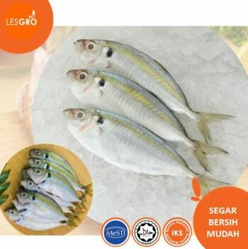 Ikan Selar Kuning -