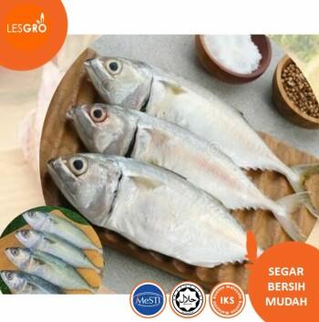 Ikan Kembung (Sedang)