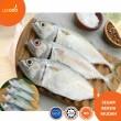 Ikan Kembung (Sedang)  - Lesgro
