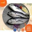 Ikan Cencaru - Lesgro