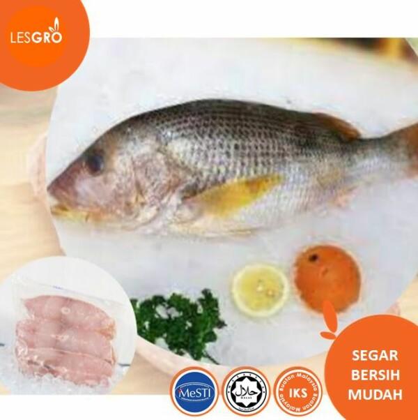 Isi Ikan Jenahak - Lesgro