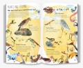 The Big Book of Birds (Preorder 2 weeks) - Petit World